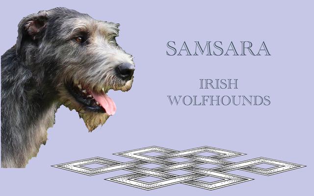 Samsara Irish Wolfhounds